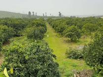 ویلا باغ 2.7 هکتاری روستا زیبا کوتنا در شیپور