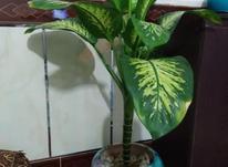 گل چند تا هر عدد 2 در شیپور-عکس کوچک