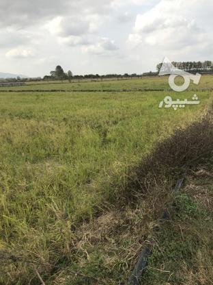 فروش زمین کشاورزی یک هکتار در گروه خرید و فروش املاک در گیلان در شیپور-عکس1