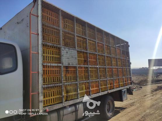 یک اوتاق مرغی  80درصد همش سه سال کارکرده در گروه خرید و فروش وسایل نقلیه در آذربایجان غربی در شیپور-عکس3