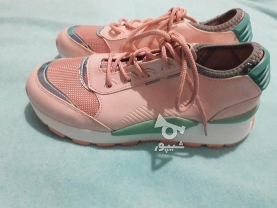 کفش سایز 38 در گروه خرید و فروش لوازم شخصی در گلستان در شیپور-عکس1