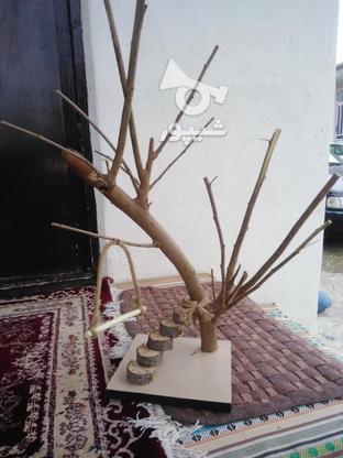 نشیمنگاه پرنده ولانه  در گروه خرید و فروش خدمات و کسب و کار در گیلان در شیپور-عکس5