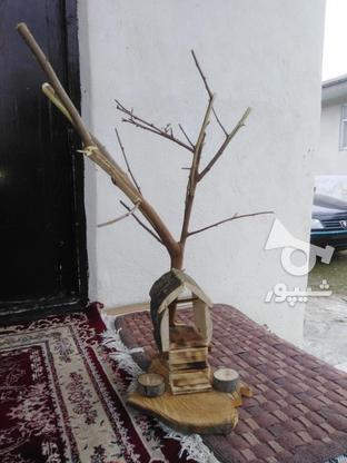 نشیمنگاه پرنده ولانه  در گروه خرید و فروش خدمات و کسب و کار در گیلان در شیپور-عکس4
