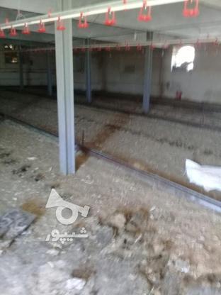 فروش کود مرعی از کاشان در گروه خرید و فروش صنعتی، اداری و تجاری در کرمان در شیپور-عکس8