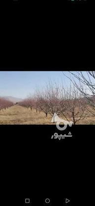 باغ 2000 متر ده ساله در گروه خرید و فروش املاک در آذربایجان غربی در شیپور-عکس1