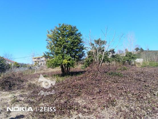 فروش زمین داخل طرح ویو عالی منطقه کوره کاهبیجار در گروه خرید و فروش املاک در گیلان در شیپور-عکس2