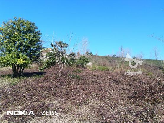 فروش زمین داخل طرح ویو عالی منطقه کوره کاهبیجار در گروه خرید و فروش املاک در گیلان در شیپور-عکس5
