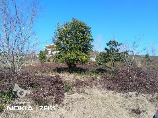 فروش زمین داخل طرح ویو عالی منطقه کوره کاهبیجار در گروه خرید و فروش املاک در گیلان در شیپور-عکس1