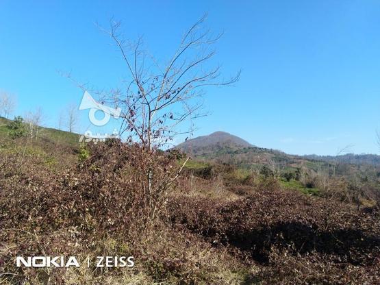 فروش زمین داخل طرح ویو عالی منطقه کوره کاهبیجار در گروه خرید و فروش املاک در گیلان در شیپور-عکس6