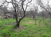 باغ میوه درختان عالی 3000 متر شهریار در شیپور-عکس کوچک