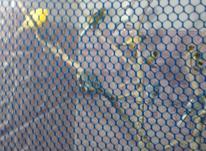 قناری رسمی معمولی در شیپور-عکس کوچک