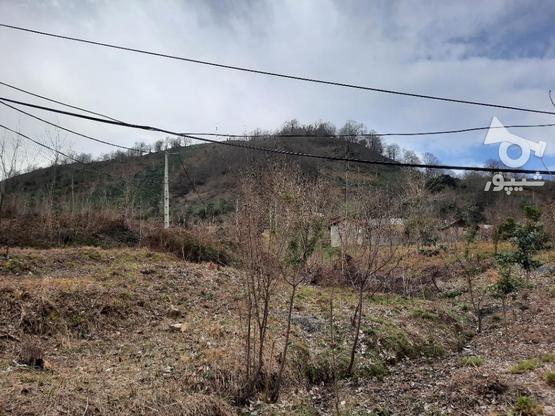 فروش زمین مسکونی 880 متر در لاهیجان در گروه خرید و فروش املاک در گیلان در شیپور-عکس2