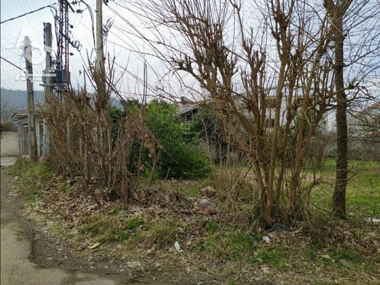 فروش زمین مسکونی تجاری 710 متری در کوی سوستان لاهیجان در گروه خرید و فروش املاک در گیلان در شیپور-عکس3