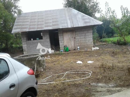 فروش زمین مسکونی 3800 متر در لاهیجان در گروه خرید و فروش املاک در گیلان در شیپور-عکس5
