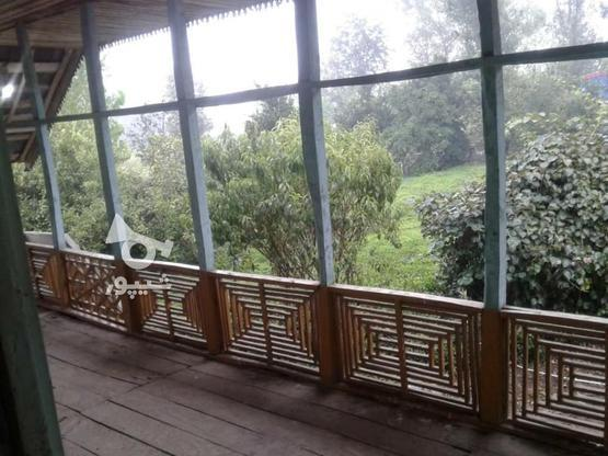 فروش زمین مسکونی 3800 متر در لاهیجان در گروه خرید و فروش املاک در گیلان در شیپور-عکس1