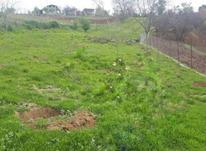 فروش زمین کشاورزی 2000 متر در رستمکلا در شیپور-عکس کوچک