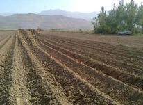 فروش زمین گلخانه ای 15000 متر در نظرآباد در شیپور-عکس کوچک