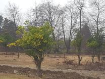 زمین در شهرک نوپا عالی برای سرمایه گذاری و ساخت در شیپور