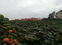 فروش باغ4000 متر در تالش در شیپور-عکس کوچک