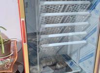 .دستگاهجوجه شتر مرغ جوجه   در شیپور-عکس کوچک