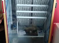 دستگاه جوجه شتر مرغ جوجه دستگاه  در شیپور-عکس کوچک