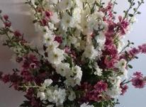 گل و گلدون  گلدکیش در شیپور-عکس کوچک