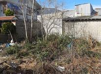 زمین مسکونی 160 متر با قابلیت تجاری در بازکیاگوراب لاهیجان در شیپور-عکس کوچک