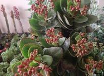 فروش ویژه گیاه و گل و گلدان در شیپور-عکس کوچک