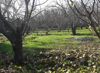3000 متر زمین باغی بافت مسکونی  در شیپور-عکس کوچک