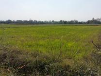 فروش زمین کشاورزی 16000 متر در محمودآباد در شیپور