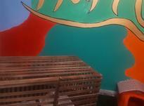 توله سگ های سایز ریز در شیپور-عکس کوچک
