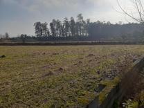 فروش زمین مسکونی 3500 متر در آمل.اسپند در شیپور