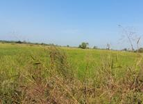 فروش زمین کشاورزی 9000 متر در جاده کلوده در شیپور-عکس کوچک