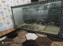 آکواریوم ماهی بزرگ و سالم  در شیپور-عکس کوچک