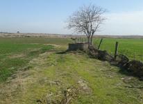 زمین زراعی 16000 متر در ساری فرح آباد روستای شیرین بل در شیپور-عکس کوچک