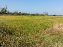 فروش زمین کشاورزی 4000 متری سنددار در شیپور