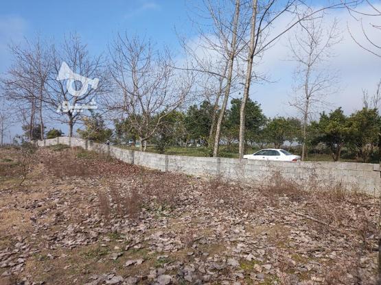 فروش زمین  2000 متر در آمل در گروه خرید و فروش املاک در مازندران در شیپور-عکس1