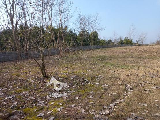 فروش زمین  2000 متر در آمل در گروه خرید و فروش املاک در مازندران در شیپور-عکس3