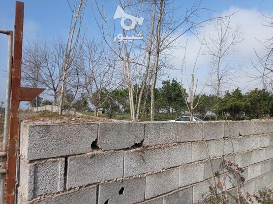 فروش زمین  2000 متر در آمل در گروه خرید و فروش املاک در مازندران در شیپور-عکس2