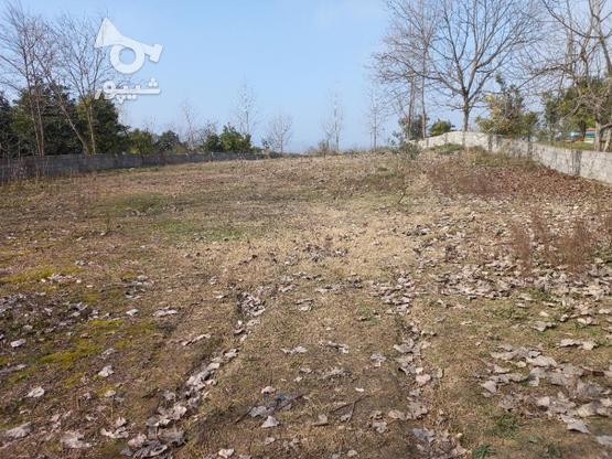 فروش زمین  2000 متر در آمل در گروه خرید و فروش املاک در مازندران در شیپور-عکس4