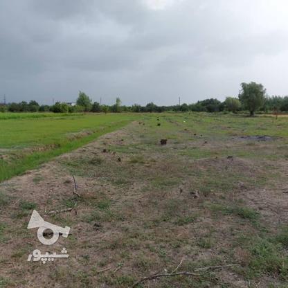 6600متر زمین در آبکسر در گروه خرید و فروش املاک در مازندران در شیپور-عکس10