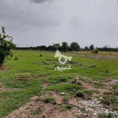 6600متر زمین در آبکسر در گروه خرید و فروش املاک در مازندران در شیپور-عکس14
