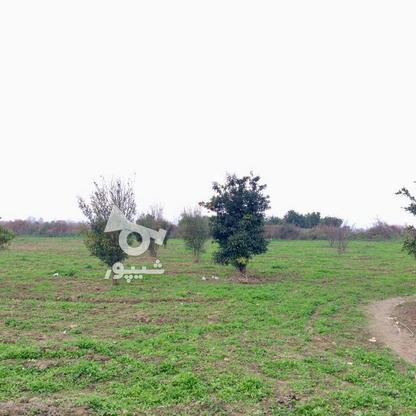 فروش  باغ 2هکتاری در  آمل در گروه خرید و فروش املاک در مازندران در شیپور-عکس2