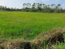 فروش زمین کشاورزی 4000 متر در محمودآباد در شیپور