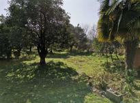 فروش زمین مسکونی 208 متر در تنکابن ابتدا کمربندی بزرگ در شیپور-عکس کوچک