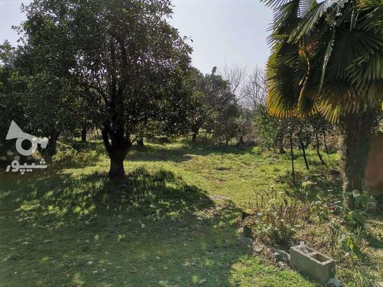 فروش زمین مسکونی 208 متر در تنکابن ابتدا کمربندی بزرگ در گروه خرید و فروش املاک در مازندران در شیپور-عکس1
