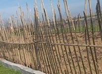 باغچه نزدیک بافت 170 متر درجاده بابل بهنمیر در شیپور-عکس کوچک