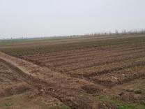 فروش 13 هزار متر زمین دست اول مناسب خونه باغ در شیپور