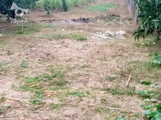 زمین 400متری مسکونی روستا واسکس در گروه خرید و فروش املاک در مازندران در شیپور-عکس16