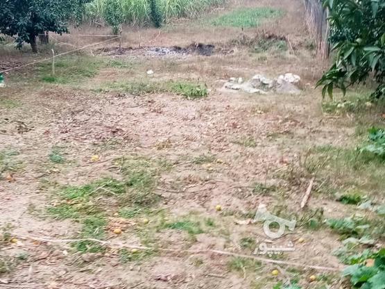 زمین 400متری مسکونی روستا واسکس در گروه خرید و فروش املاک در مازندران در شیپور-عکس2